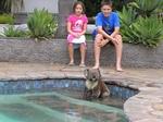 Koalapool