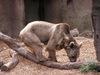 Zoo1lg