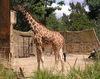 Zoo7lg